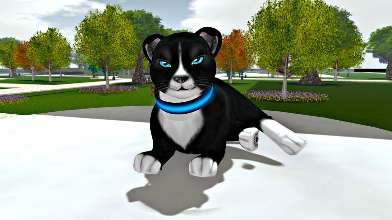 Stray Cats_002