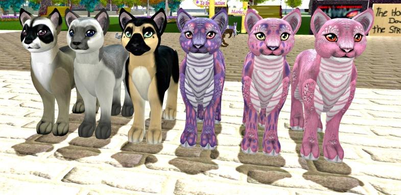 Stray Cats_003